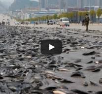 Insolite : Une pluie de poisson en Chine