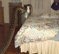 Vidéo : Elle découvre un énorme serpent à son réveil