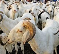Pour pouvoir acheter un mouton pour la Tabaski, il ordonne à sa femme de se prostituer