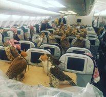 Un prince saoudien a acheté un billet d'avion pour chacun de ses 80 faucons