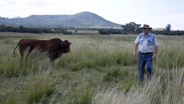 Afrique du Sud: les terres bientôt redistribuées aux Noirs