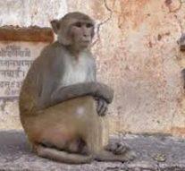 Un bébé kidnappé par un singe retrouvé mort