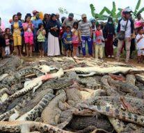 Un village indonésien a tué prés de 300 crocodiles pour se venger …