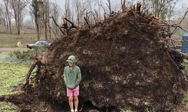 Un garçon de 12 ans est écrasé alors qu'il se tenait près d'un arbre tombé qui est soudainement revenu à sa place après un violent orage