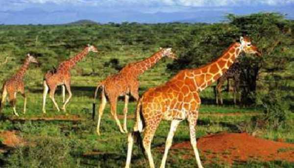 Les plus belles destinations africaines