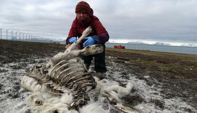 Plus de 200 rennes retrouvés morts en Norvège, affaiblis par le changement climatique