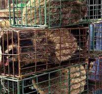 La Chine interdit de manger des animaux sauvages suite à l'épidémie de coronavirus