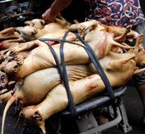 Une ville chinoise interdit de manger des chiens et des chats après une épidémie de coronavirus